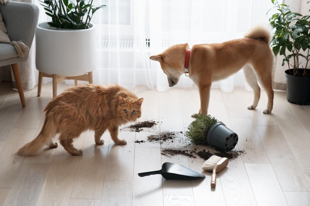 Dommage causé par les animaux domestiques