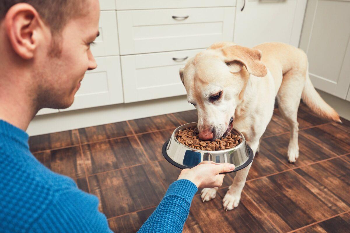 nourrir animaux compagnies